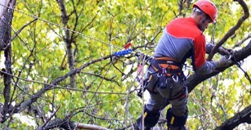 Vidalennya-derev-alpinistami