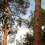 Видалення дерев альпіністами