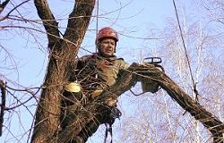 Arboristika-kiev-kronirovanie-i-udalenie-derevev