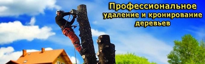 Vidalennya-i-valka-derev